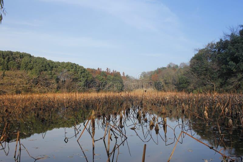 Heuvels en bos die de pool met blauwe hemel overdenken royalty-vrije stock afbeeldingen