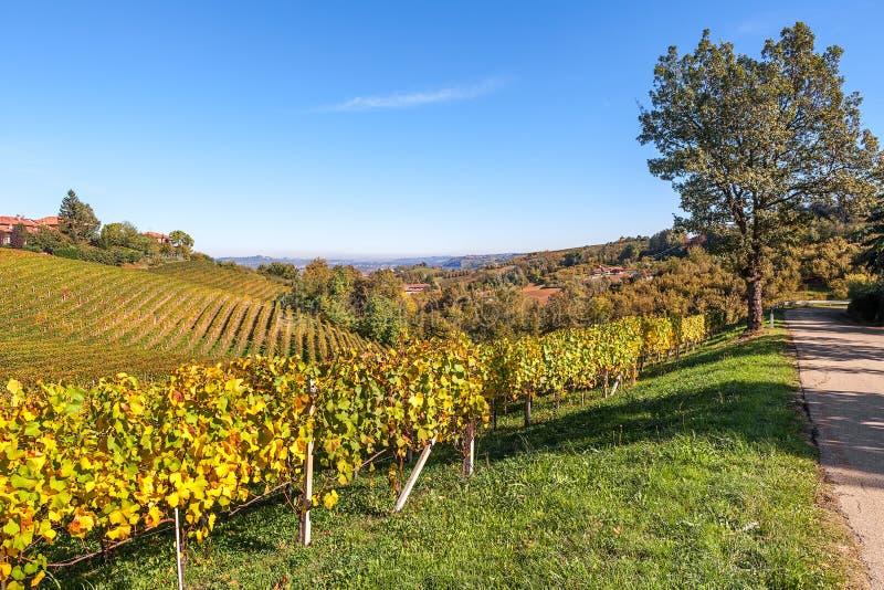 Heuvels en vineyads van Piemonte stock fotografie