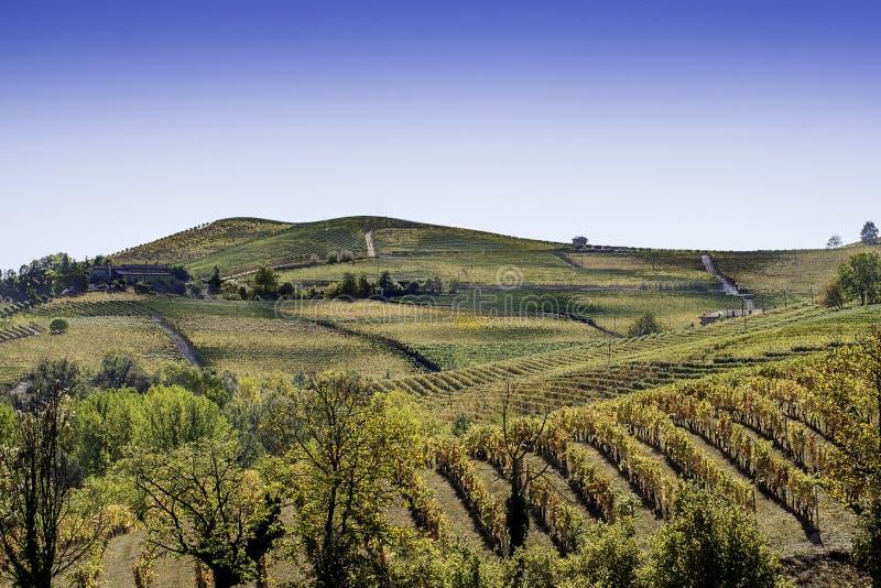 Heuvels en wijngaarden royalty-vrije stock afbeelding