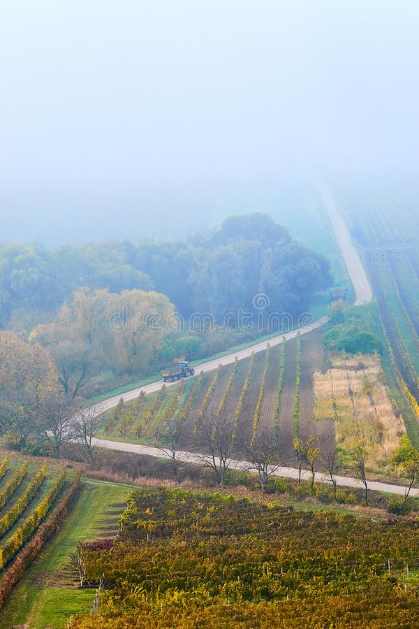 Heuvels met wijngaarden en de weg die in de mist verdwijnen Platteland met wijngaard en gebieden met patronen op heuvels zuiden stock foto