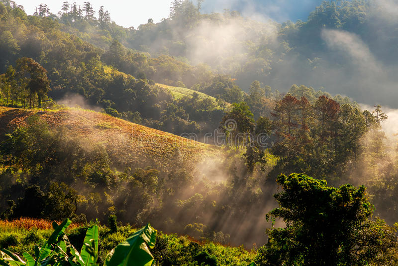Heuvels met wolk en mist stock afbeelding