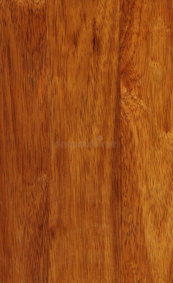 Hevea Wood Texture Royalty Free Stock Photos