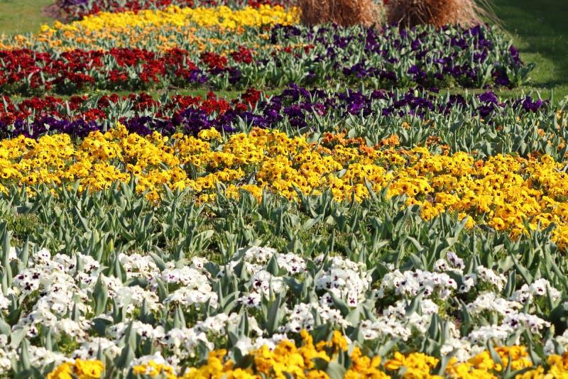 Hevig gebied in park in Stuttgart in Duitsland royalty-vrije stock fotografie