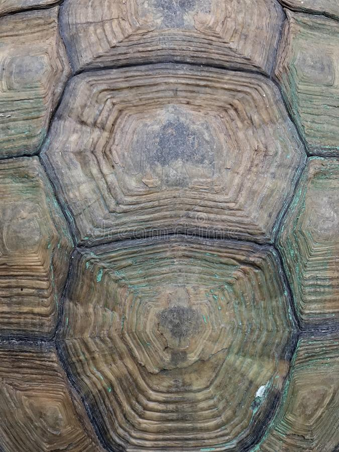 Hexagon shape turtle shell texture background. Hexagon shape pattern turtle shell, natural pattern, rough and hard animal shell royalty free stock images