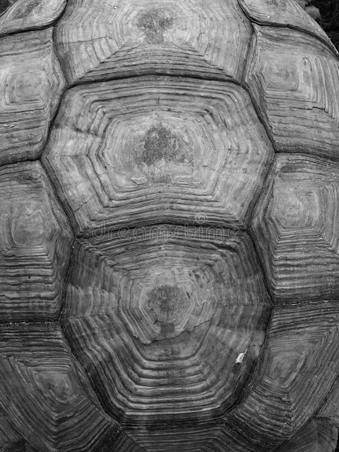 Hexagon shape turtle shell texture background. Hexagon shape pattern turtle shell, natural pattern, rough and hard animal shell royalty free stock photo