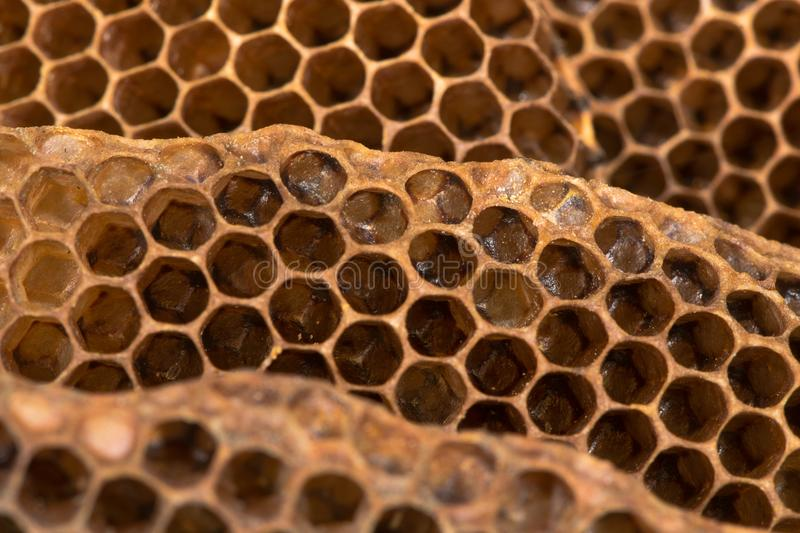 Honey comb with honey bee & x28;Apis mellifera& x29; nest stock image