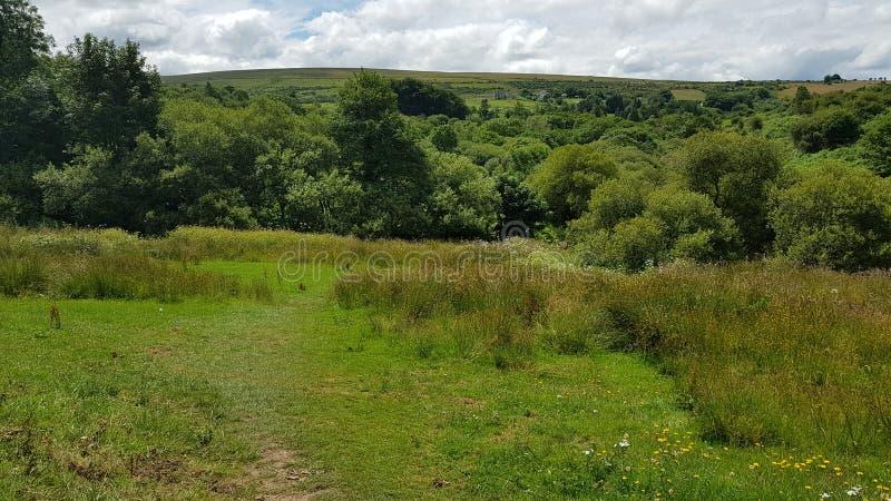 Hexworthy dal Dartmoor nationalpark Devon UK fotografering för bildbyråer