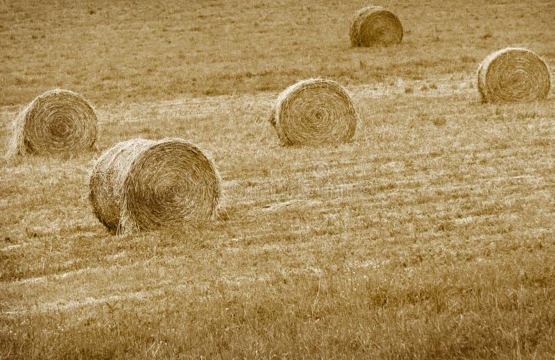 Download Hey balas imagem de stock. Imagem de outono, alimentação - 10065417