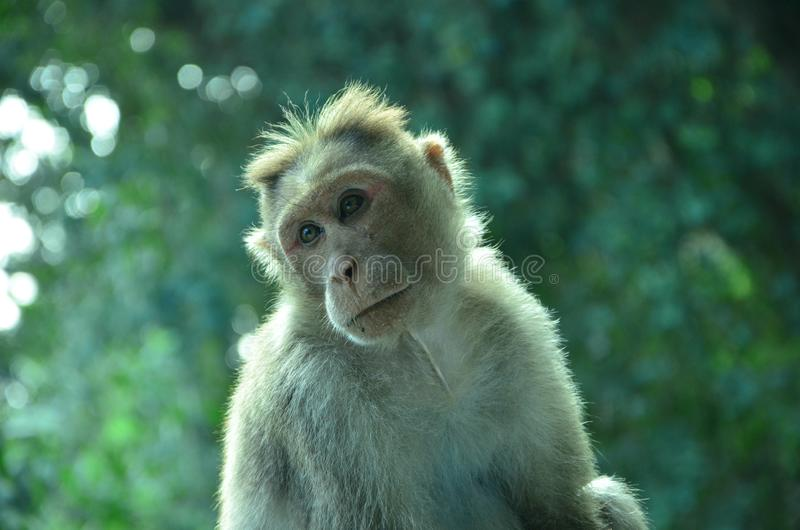 Hey ben ik hier kerels Deze foto wordt genomen uit ootty, Tamilnadu stock fotografie