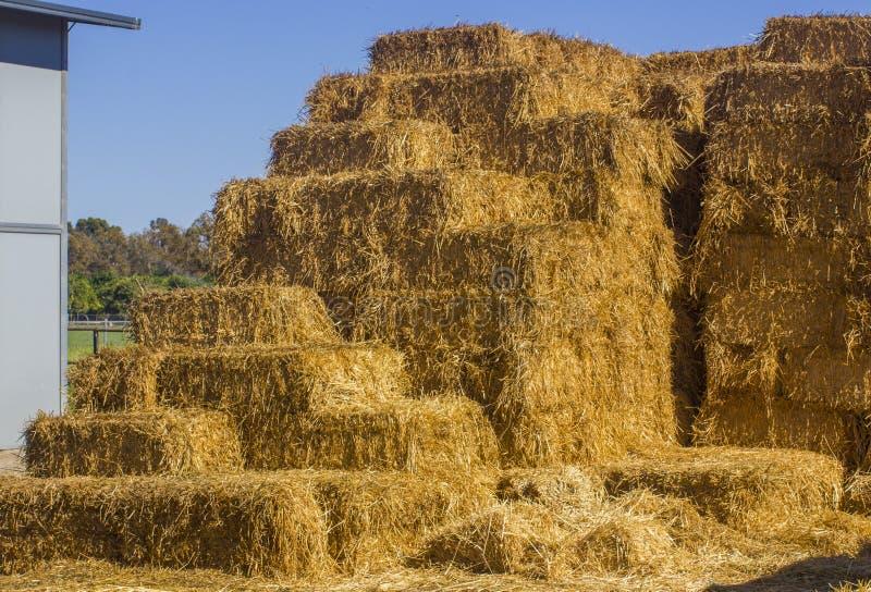 Hey in een landbouwbedrijf royalty-vrije stock fotografie