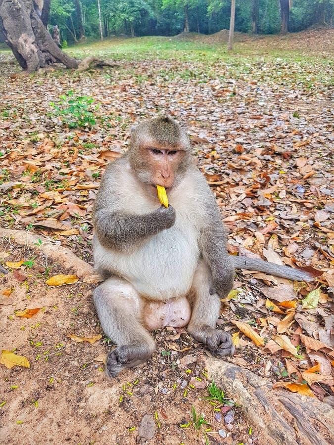 Hey macaco pequeno imagem de stock