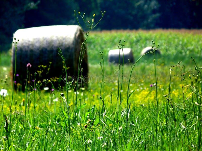 Hey rola em um prado com flores selvagens foto de stock