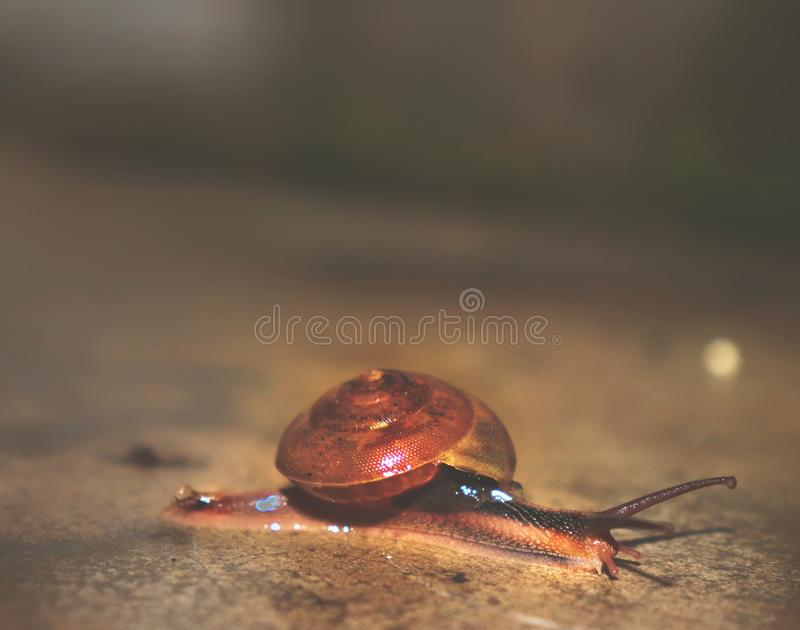 Hey Snail say cheese royalty free stock photography