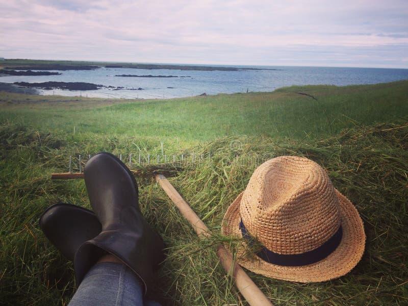 Heyharvest door de kust stock afbeeldingen