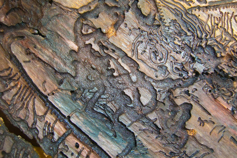 Hiéroglyphes en bois photos stock