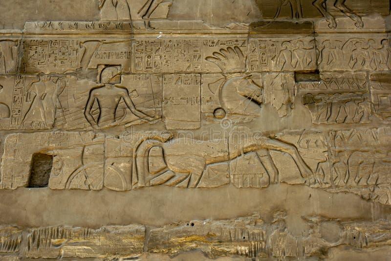 Hiërogliefen en hulp in een muur bij de Tempel die & x28 van Karnak worden gesneden; Tempel van Amun& x29; in Luxor, Egypte royalty-vrije stock fotografie