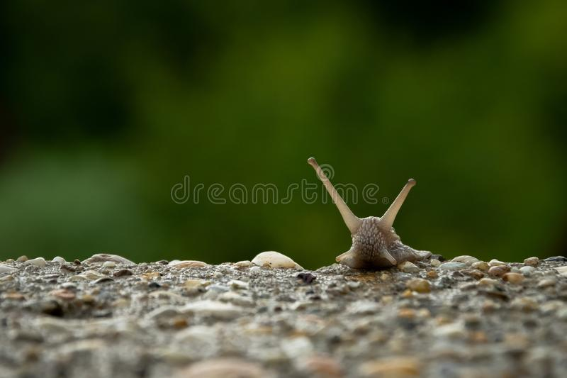 Hi bro, i am snail. A cute snail comeing up step by step stock images