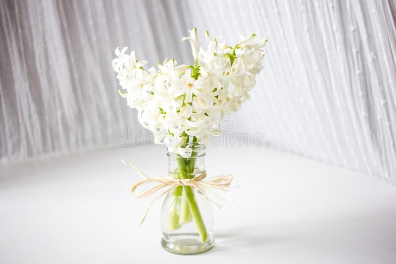 hiacyntów kwiatów wiosna zdjęcie stock