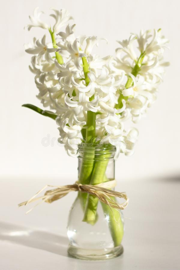 hiacyntów kwiatów wiosna obraz royalty free