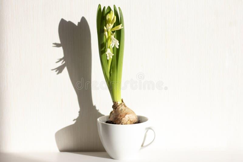 hiacyntów kwiatów wiosna obraz stock