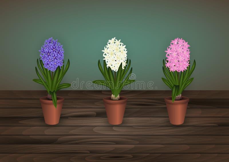 Hiacynt kwitnie w flowerpots ilustracja wektor