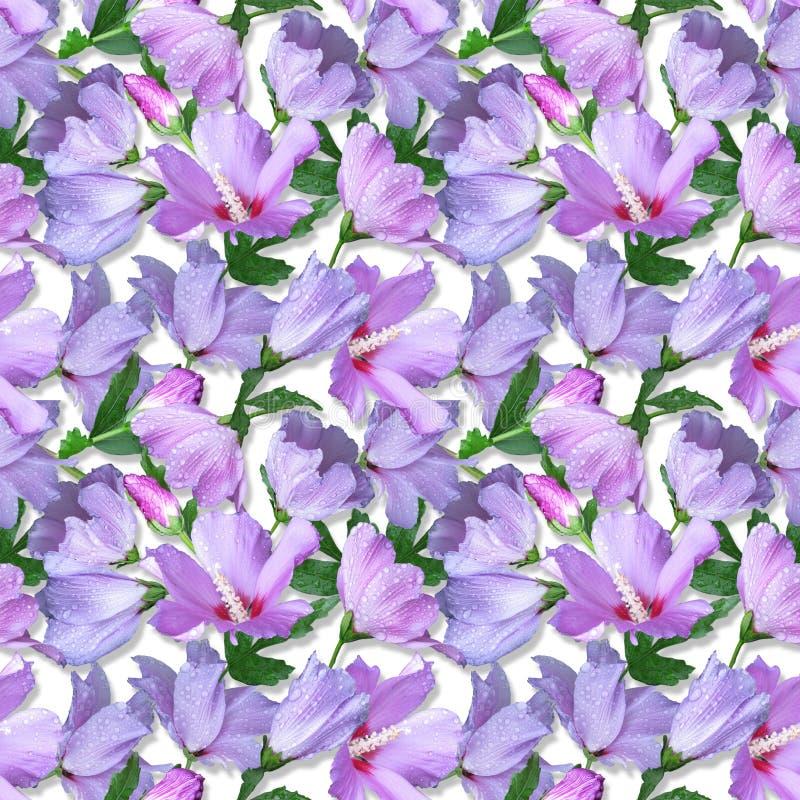 Hibicus d'échantillon de fleurs photos stock