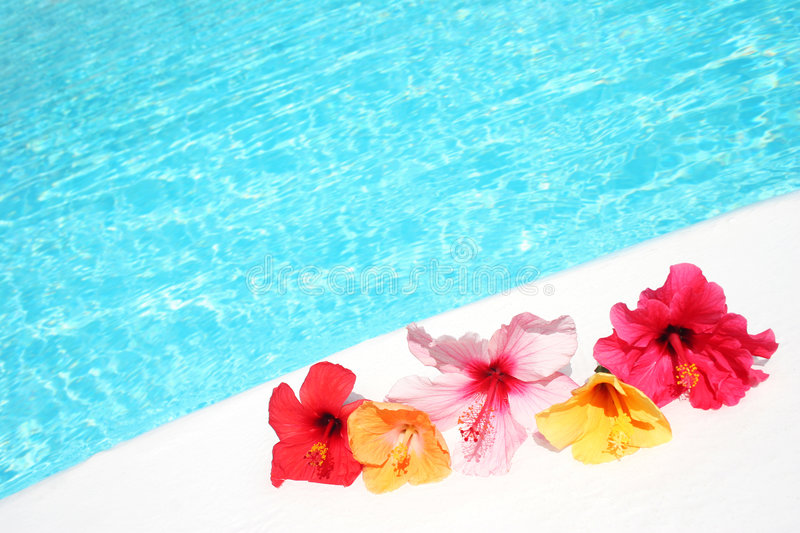 Hibicus Flowers by Pool royalty free stock photos