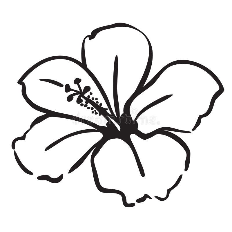 Hibisco ilustración del vector