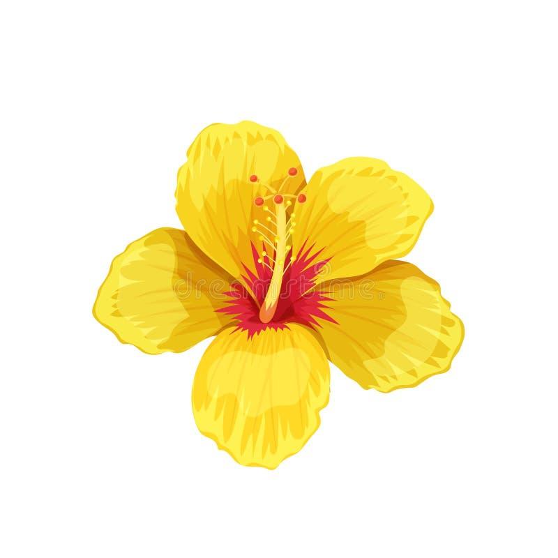 Hibisco, flor tropical stock de ilustración