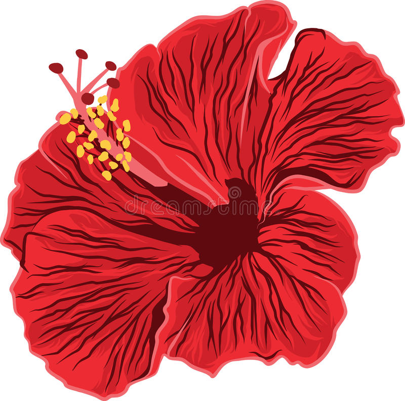 Hibisco rojo imagen de archivo