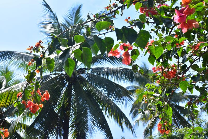 Hibisco y palmeras en verano imagen de archivo
