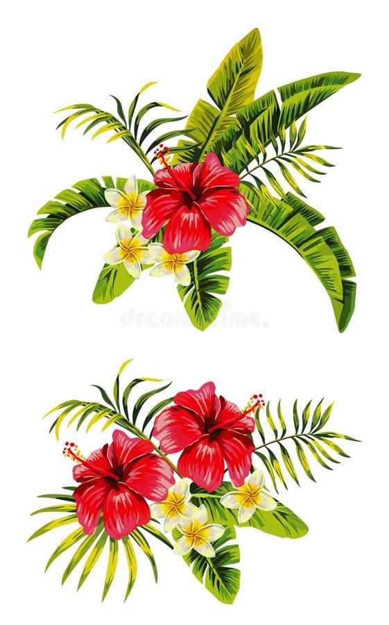 Hibiscus δέσμες plumeria ελεύθερη απεικόνιση δικαιώματος