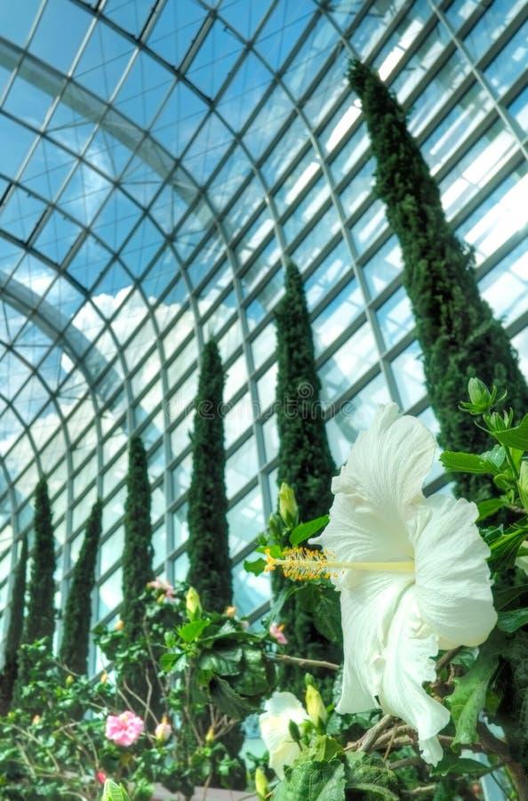 Hibiscus, θόλος λουλουδιών, κήποι από τον κόλπο στοκ εικόνες με δικαίωμα ελεύθερης χρήσης