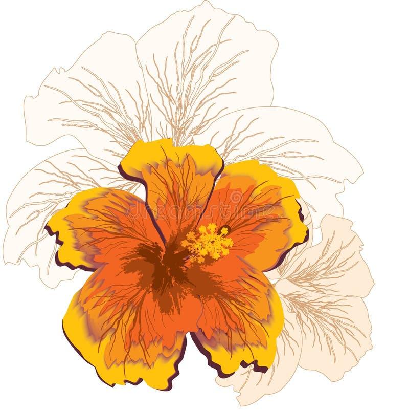hibiscus λουλουδιών διανυσματική απεικόνιση