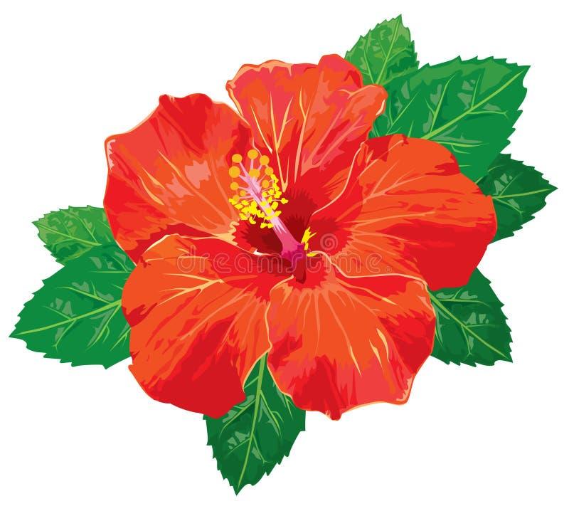 hibiscus градиентов бесплатная иллюстрация