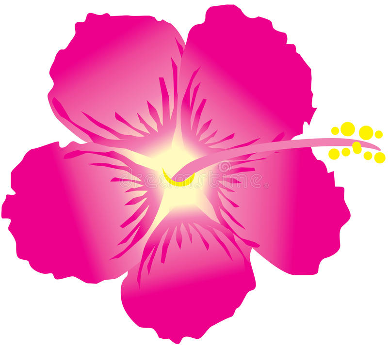 Hibiscus stock illustration