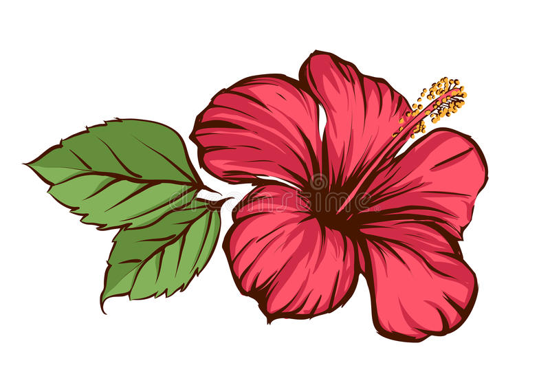 Download Hibiscus stock vector. Image of flower, abstract, background - 15312266