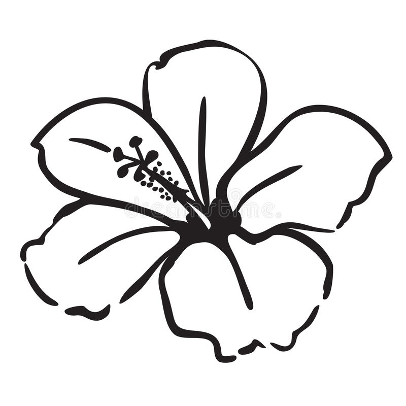 Hibiscus vector illustratie