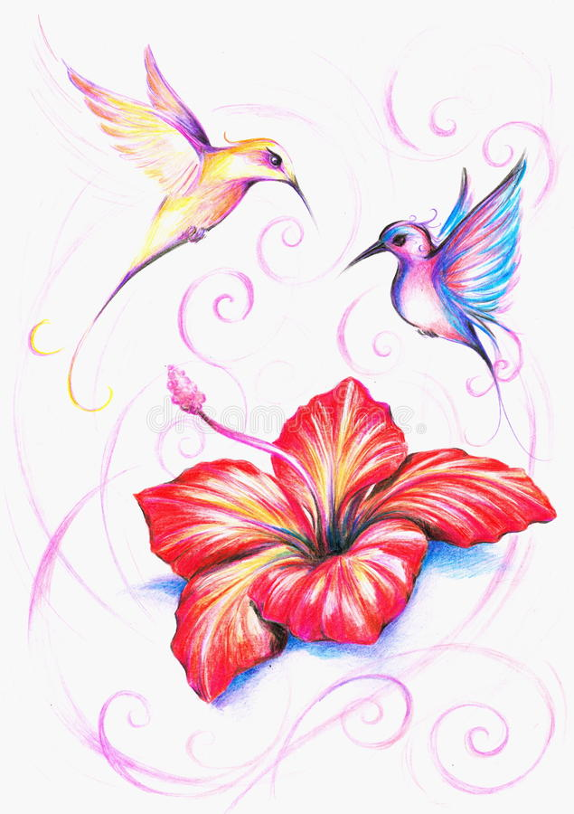 Hibiscus. Red hibiscus flower with two colorful birds.Picture I have created myself with colored pencils stock illustration
