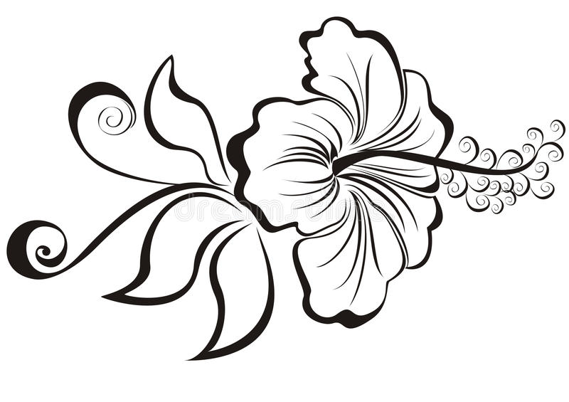 Hibiscus. Sketch of a flower. Illustration of a hibiscus royalty free illustration
