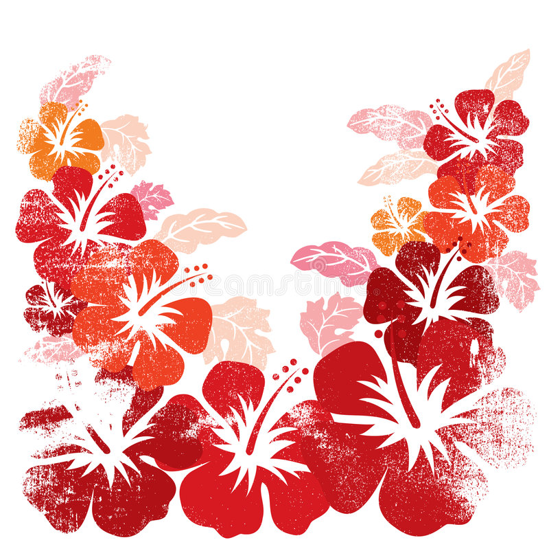 Hibiscus. This is a tropical hibiscus illustrations on white background stock illustration