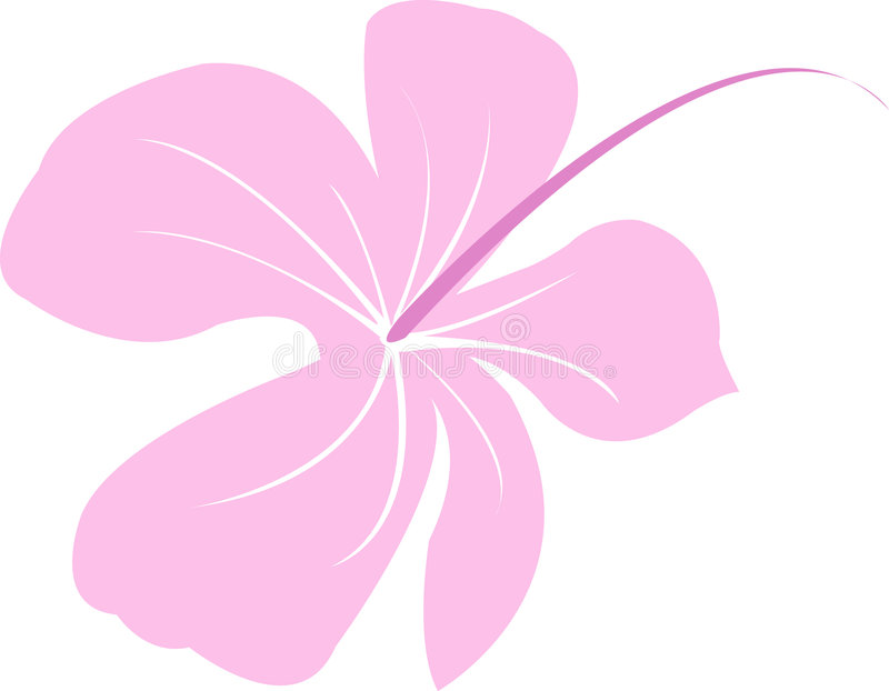 Hibiscus. Isolated hibiscus Illustration also in . ai file - VECTOR