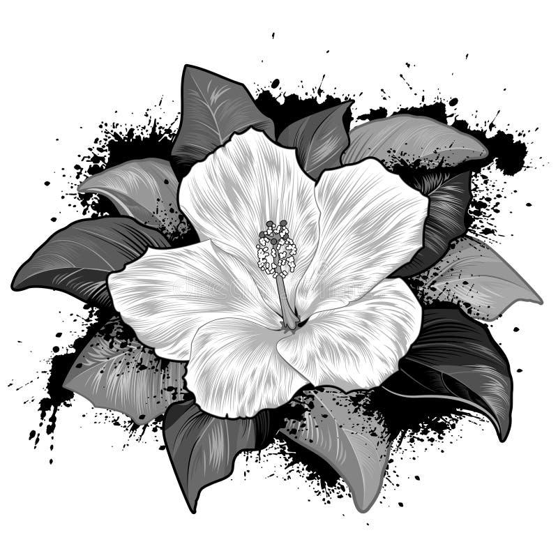 Hibiscus-Blumen-Zeichnung auf weißem Hintergrund stock abbildung