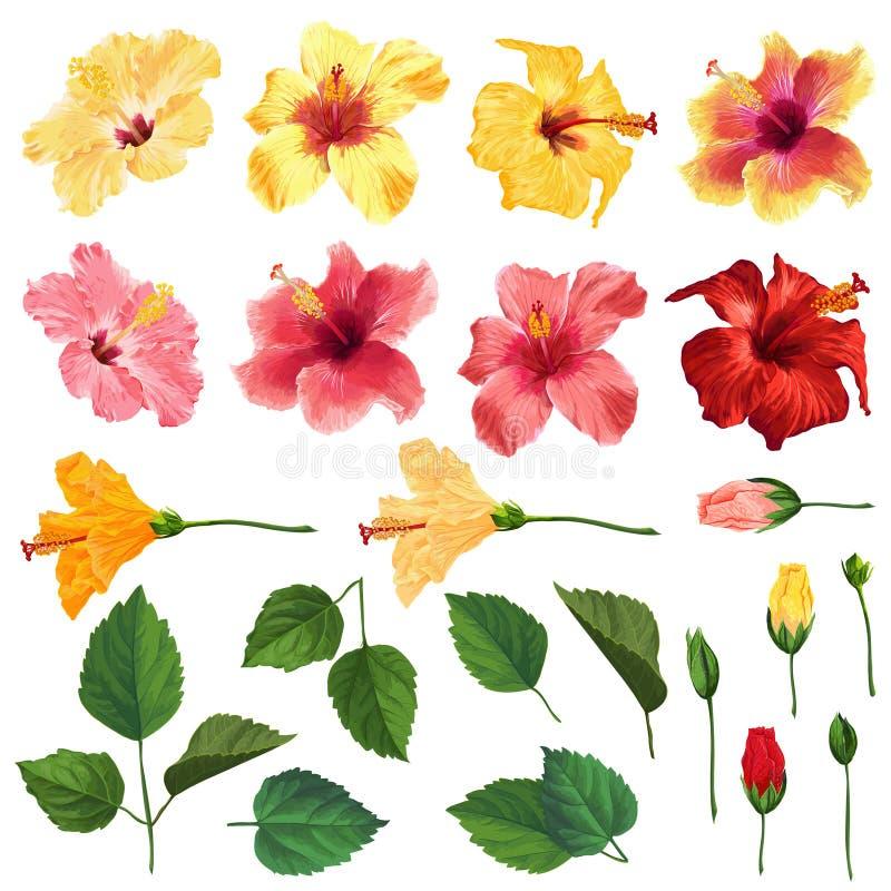 Hibiscus-Blumensatz mit Blumen, Blättern und Niederlassungen Aquarell-Hand gezeichnete Frühlings-und Sommer-Blumen für Dekoration stock abbildung