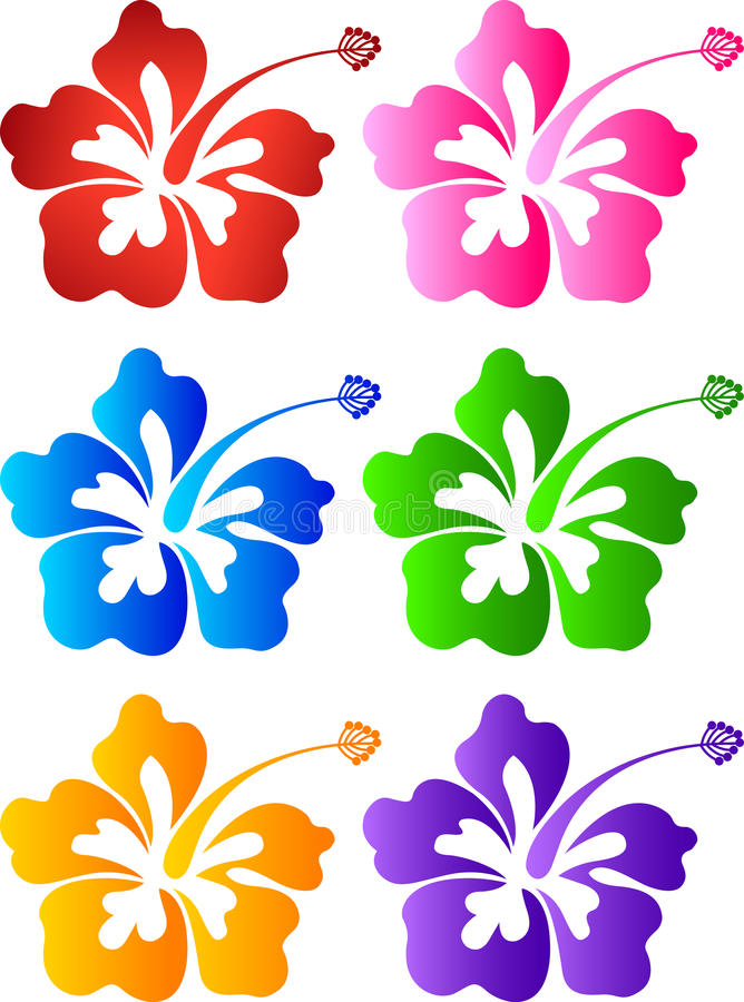 Hibiscus collection. Illustration art of a hibiscus collection with isolated background stock illustration