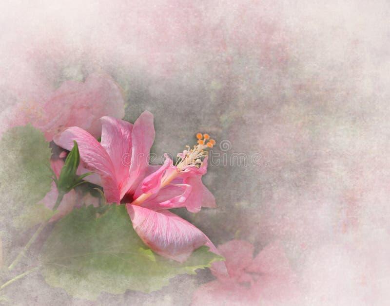 Hibiscus cor-de-rosa ilustração royalty free