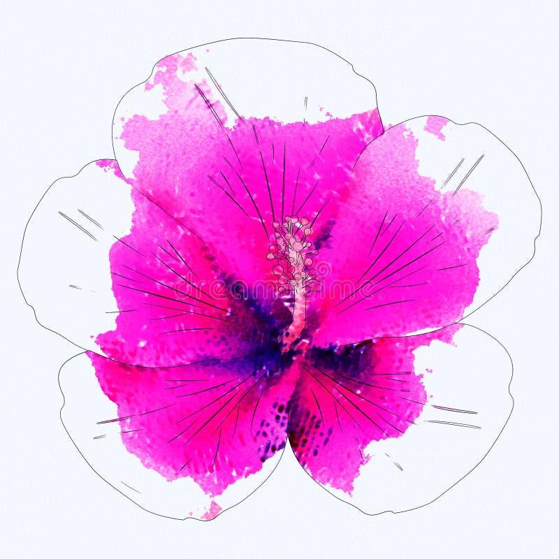 Hibiscus cor-de-rosa da aquarela ilustração royalty free