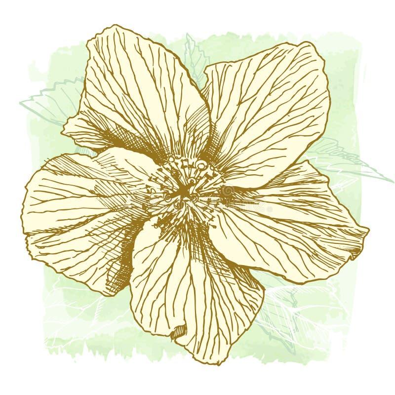 Hibiscus da aguarela do vetor ilustração stock