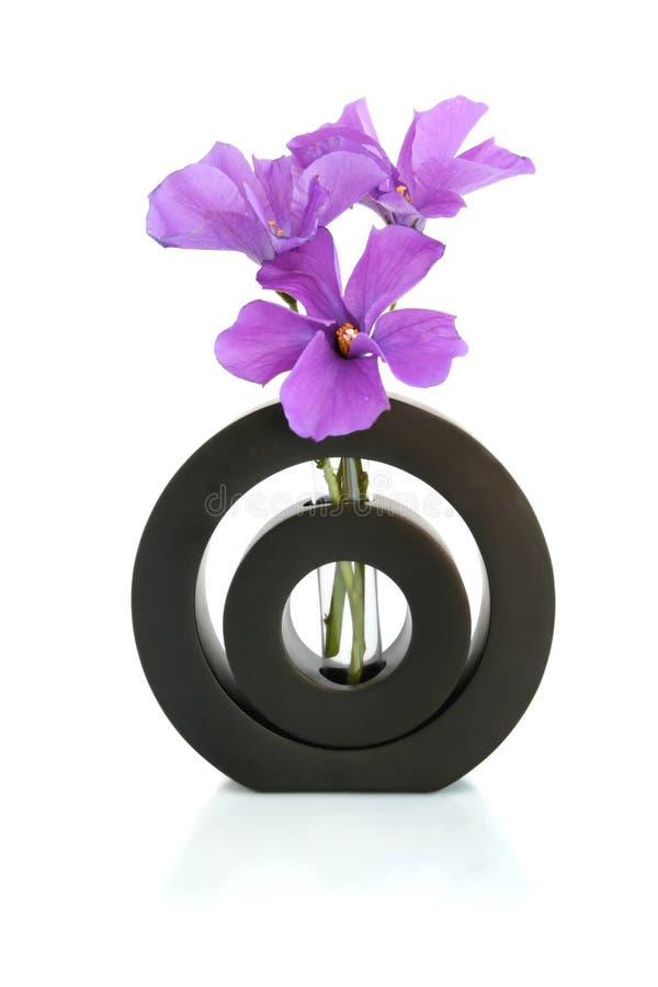 Hibiscus em um vaso preto imagens de stock