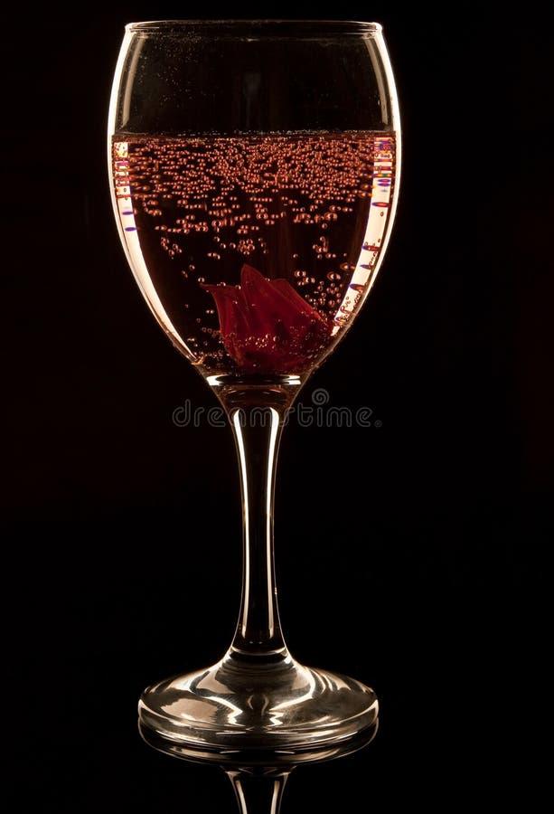 Download Hibiscus Fizz stock image. Image of sparkling, petals - 13285533